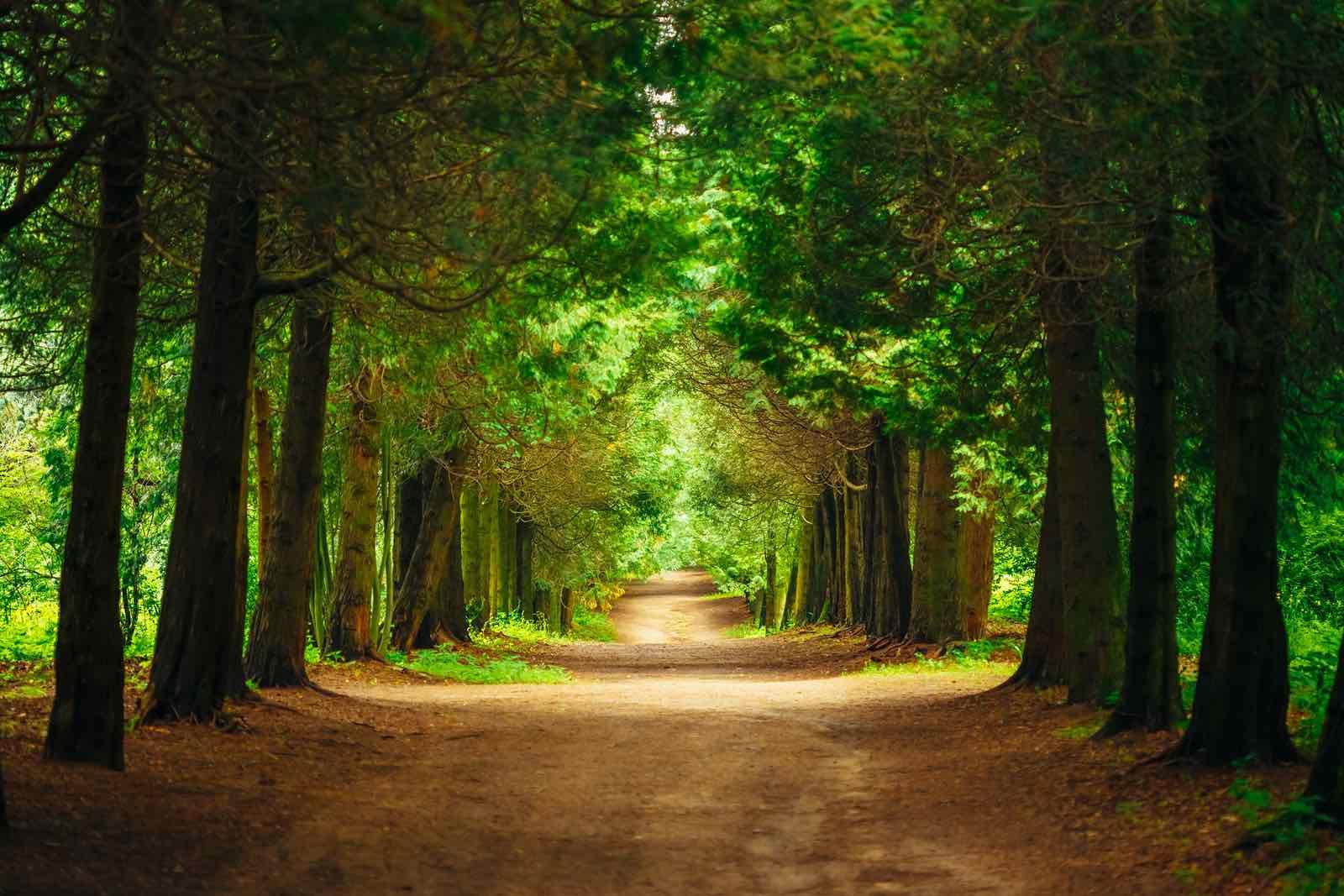 Beautiful Alley In Park. Garden Landscaping Design
