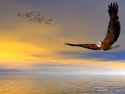 American Bald Eagle Flying Free