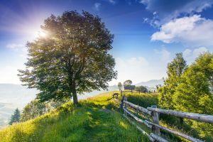 Beautiful sunny day is in mountain landscape. Carpathian, Ukraine, Europe. Beauty world.